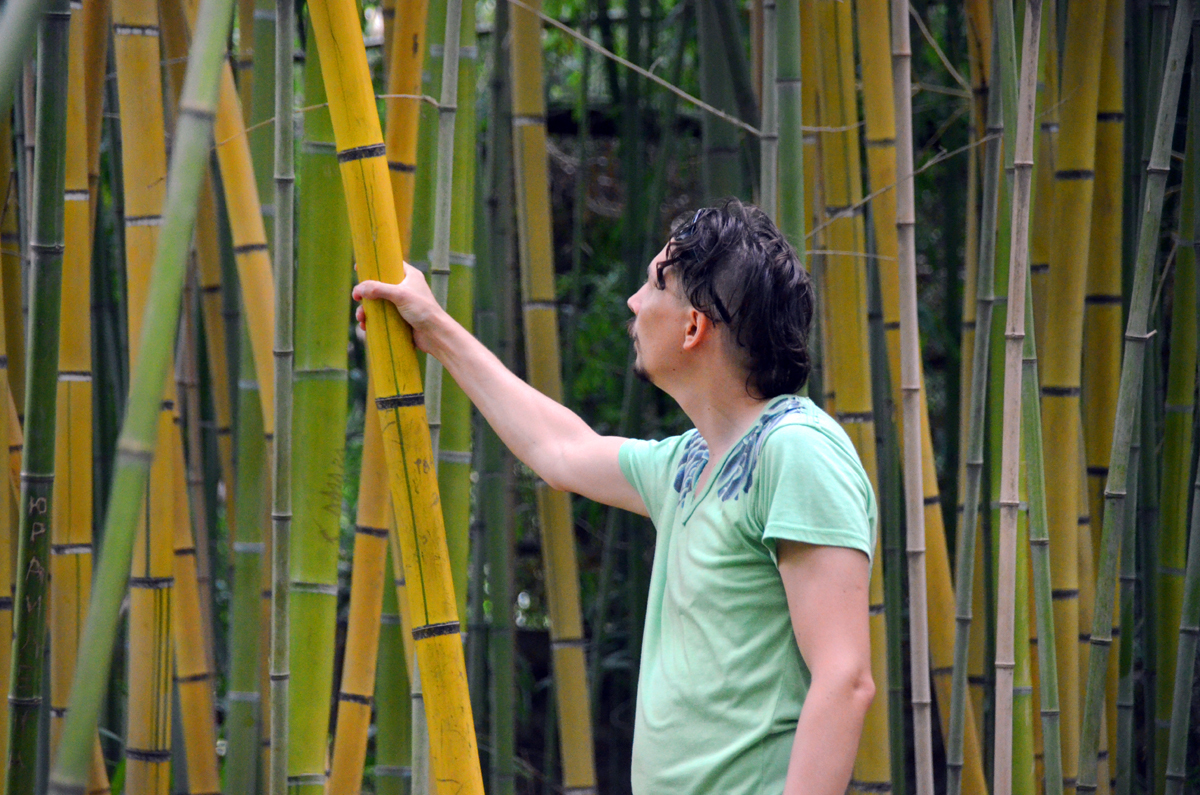 6. В зарослях бамбука.