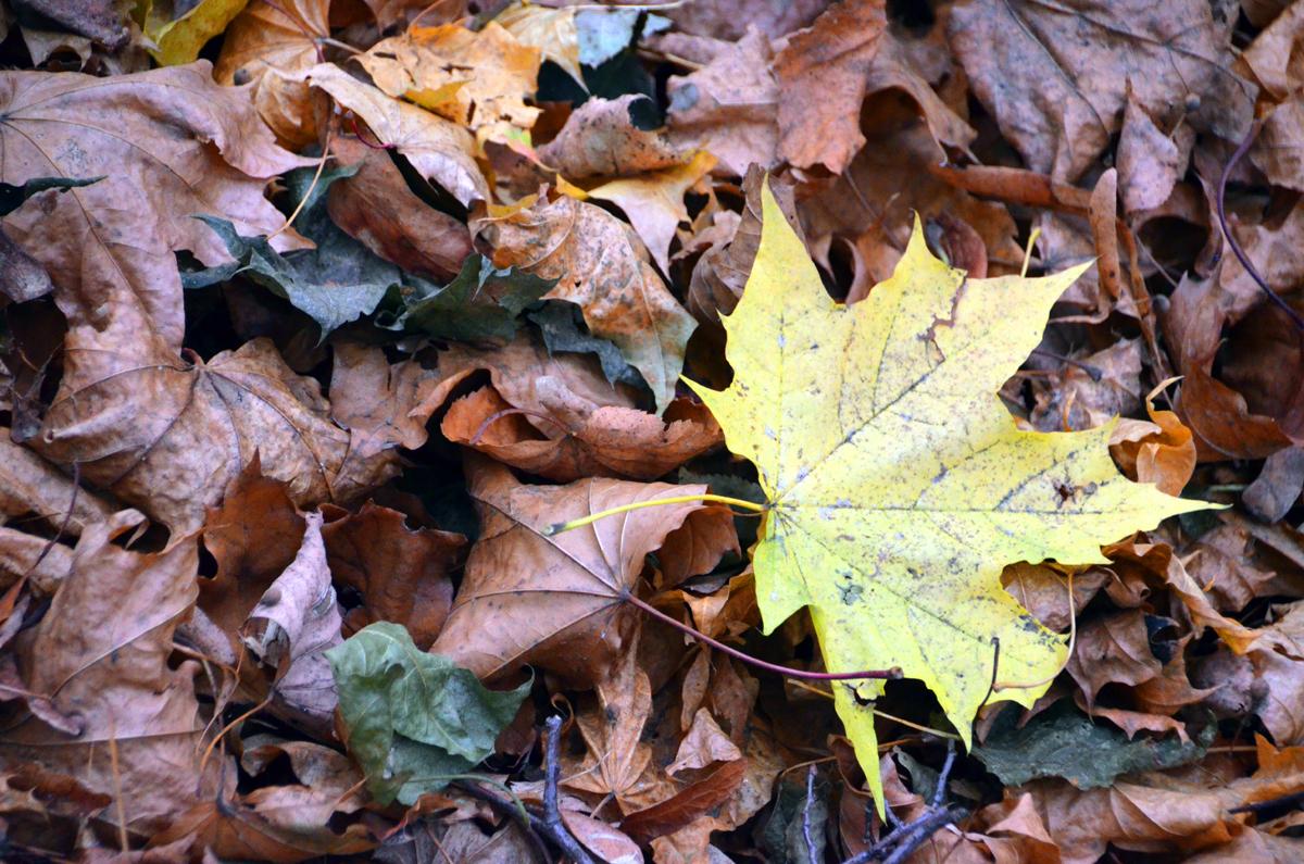 6. Осень