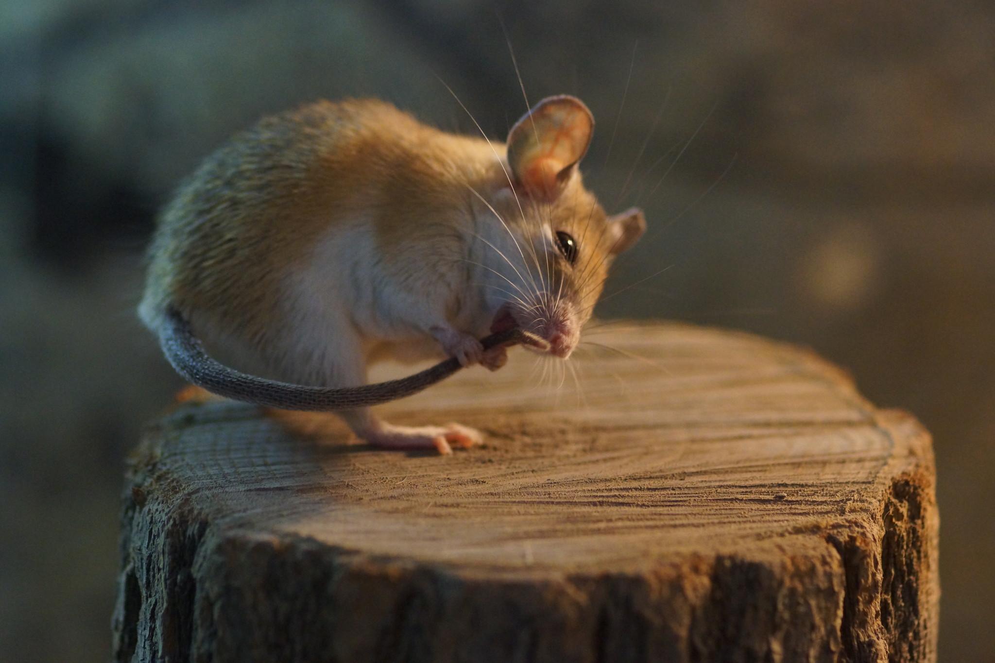Мыши красивые картинки, новому