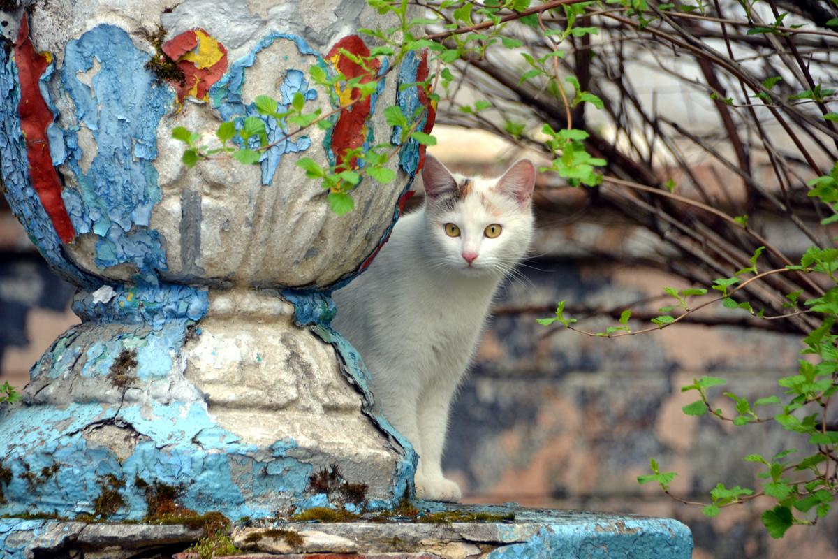 8. На развалинах нам встретился кот с жёлтыми глазами.