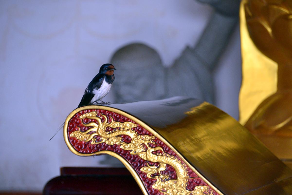 2. Ласточка в буддийском храме