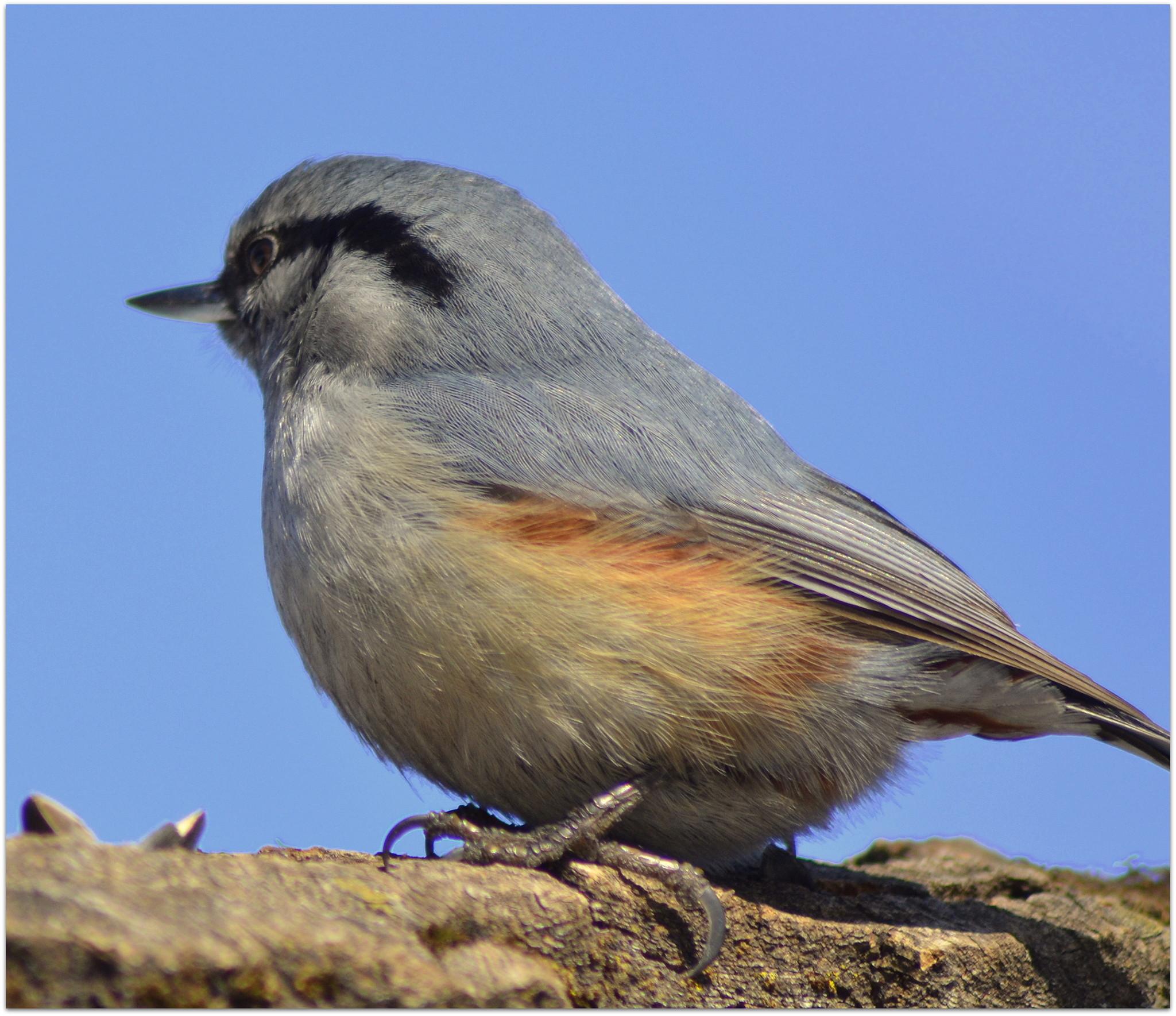 птицы приморья фотографии относительно спокойная